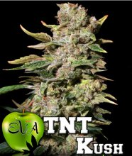 TNT KUSH · Eva Seeds · cannabis seeds · Fem